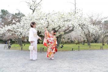 京都 ~桜と七五三~