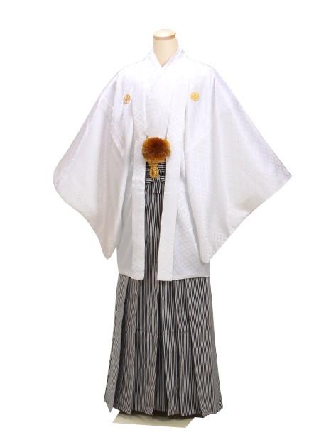 男紋付袴 卒業式 成人式 白 Lサイズ