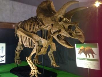 恐竜www