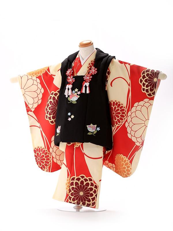 被布 赤×黒 モダン 菊橘 3199