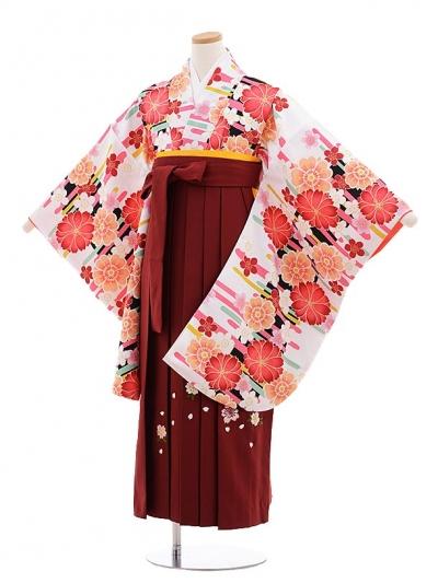 小学生卒業式袴レンタル(女の子)9647白地桜×エンジ桜袴