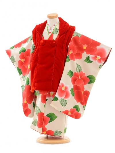 七五三レンタル(3歳女の子被布)3168赤ベルベット×白椿