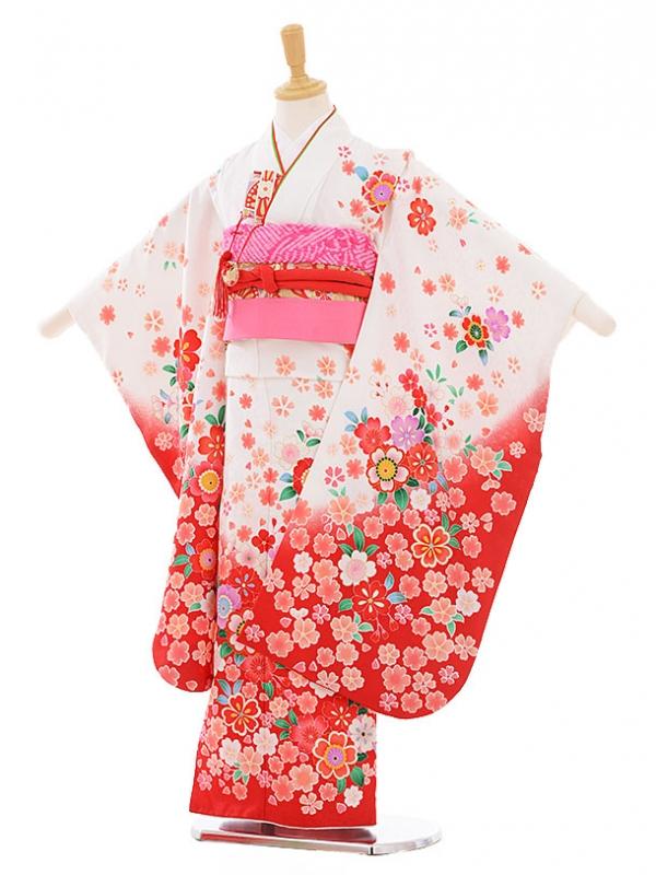 七五三レンタル(7歳女の子結び帯)7383 白地 裾赤 桜づくし