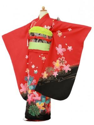 753レンタル(7歳女)2059赤裾黒桜