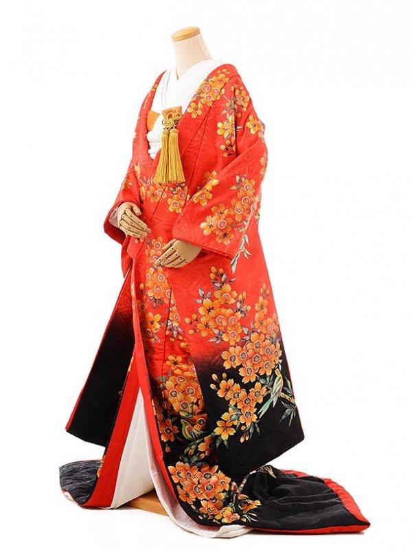 色打掛レンタル976赤×黒桜花乱舞