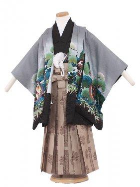 七五三(5男)5085 グレー/鷹と緑松