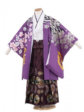 七五三(5男)5136 紫/虎桜吹雪60cm