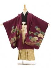 七五三(5歳男袴)A021 紫松鷹×ゴールドグリーン
