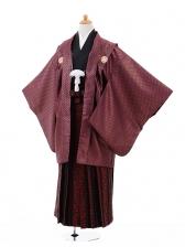ジュニア袴男児9329赤ゴールド紋付×赤柄ストライプ
