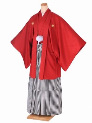 男性用袴 卒業式 成人式 H001