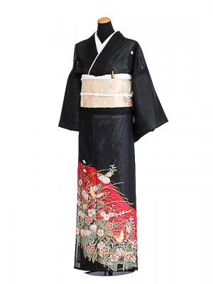 夏黒留袖tcr026蝶撫子