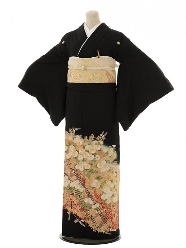 留袖 レンタル Q5-51 橘に菊