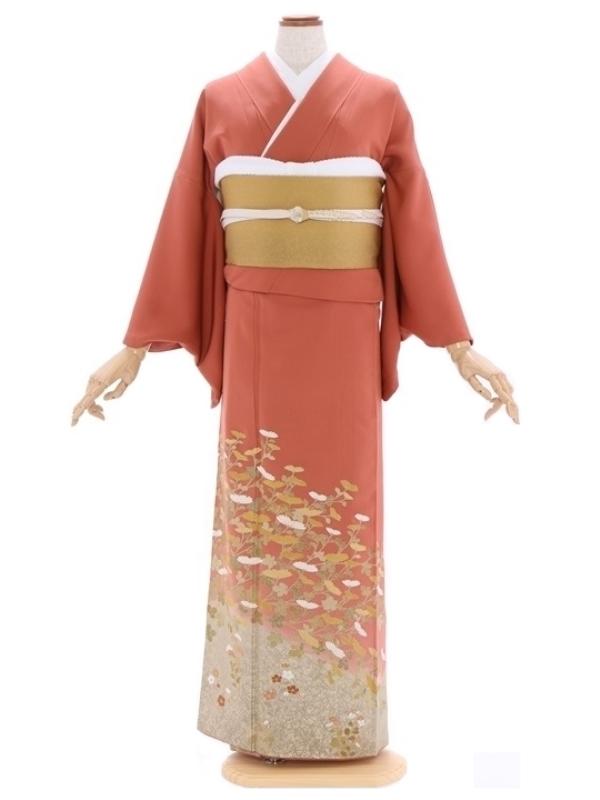色留袖87熟柿色菊にききょう