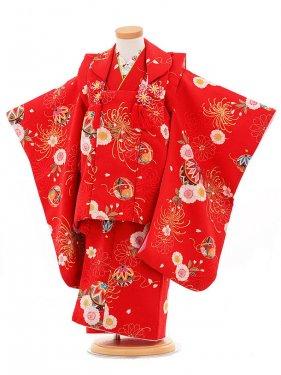 753レンタル(3歳女被布)0366赤乱菊鞠