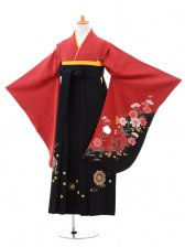 小学生卒業式袴(女の子)レンタルB056赤に
