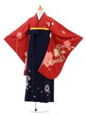 小学生卒業式袴(女の子)レンタルB032赤桜
