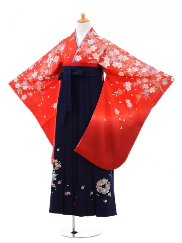 小学生卒業式袴(女の子)レンタルB036赤桜