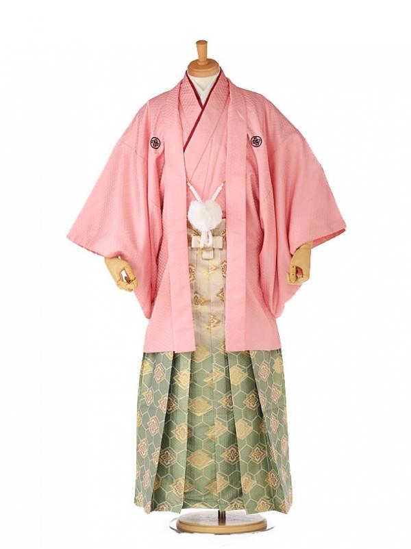 紋付 羽織着物 ピンク×緑亀甲ボカシ xg0005