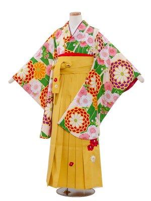 小学生卒業袴レンタル(女の子)148 緑地×矢がすり/菊と桜