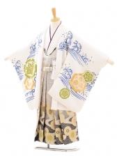 七五三(5男袴)5147 花わらべ 出世鯉/白×流