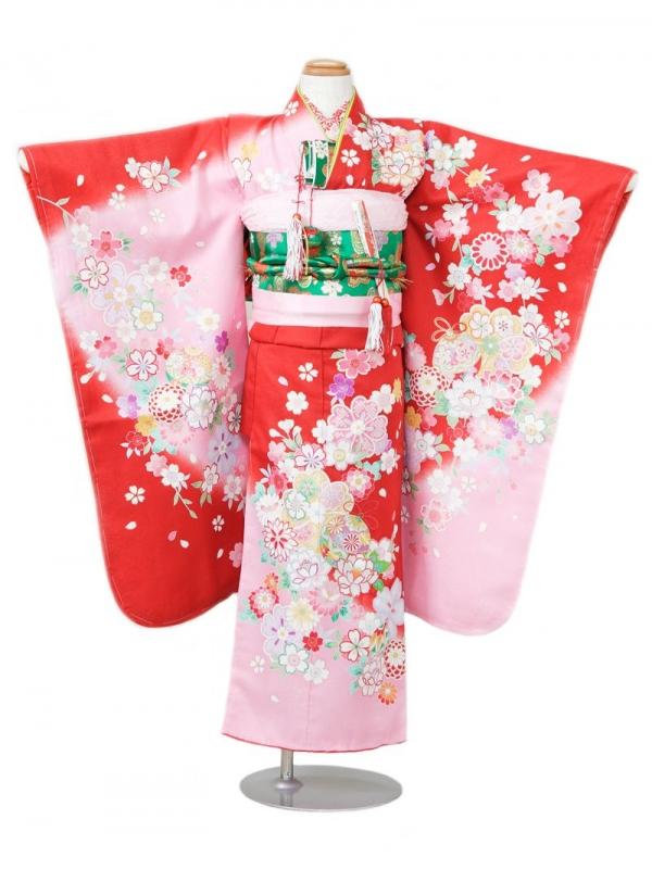 753七五三(7歳女)7851赤/ピンク地 桜菊と