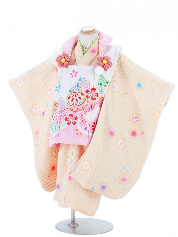七五三(3女)T336総しぼり 陽気な天使/橙×白