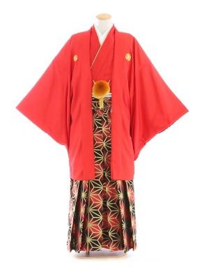 紋付袴205/スカーレット/赤黒斜めぼかし