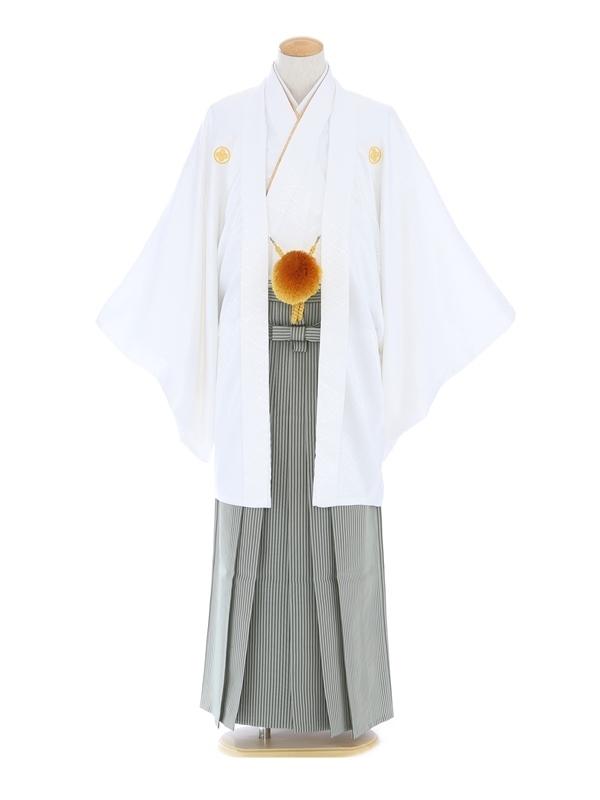 紋付袴251/白/グリーン縞