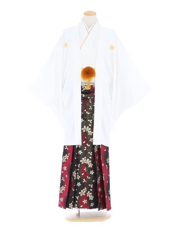 紋付袴253/白/黒ワイン桜