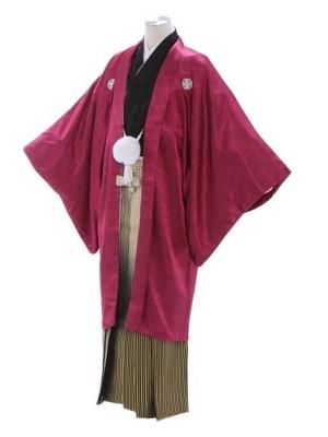 紋付袴335/ピンク/白ゴールド裾黒縞ぼかし