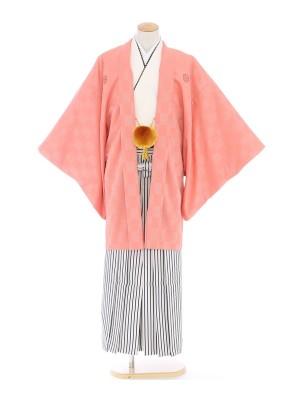 紋付袴290/キャロット/白黒