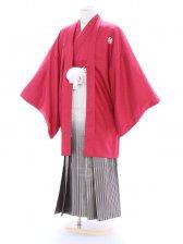 紋付袴231/ワイン/白シルバー裾黒縞ぼかし