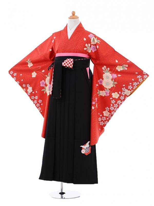 小学生卒業式袴女児A009 赤地桜×九重黒袴