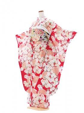 振袖355 絽 赤 桜と菊