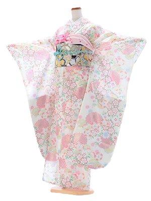 振袖356 絽 白 桜と菊