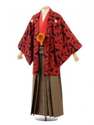 男性用袴men0118黒地赤羽×ブラウンゴールド袴