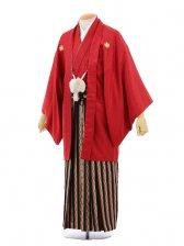 成人式卒業式袴レンタル(男)D032赤紋付×黒ゴール