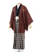 成人式卒業式袴レンタル(男)D024ブラウン紋付×黒