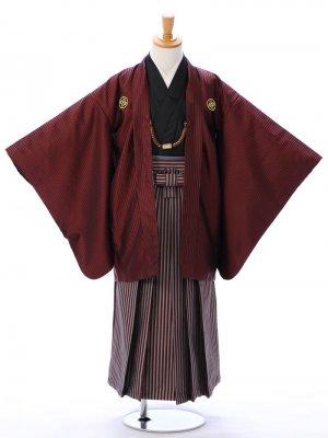 ジュニア袴男児 BV049 エビ茶 縞/エンジ 縄縞袴