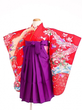 七五三(3歳女袴)女児袴sfts008赤桜鼓/紫無
