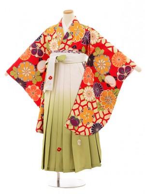 小学校卒業式袴レンタル(女の子)9811 赤地菊梅×白グリーン袴
