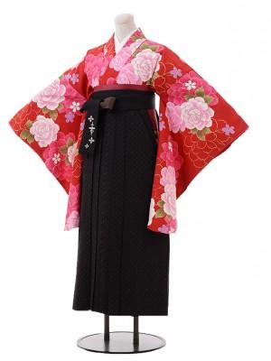 小学生卒業式袴レンタル(女の子)9389赤地バラ×黒茶袴