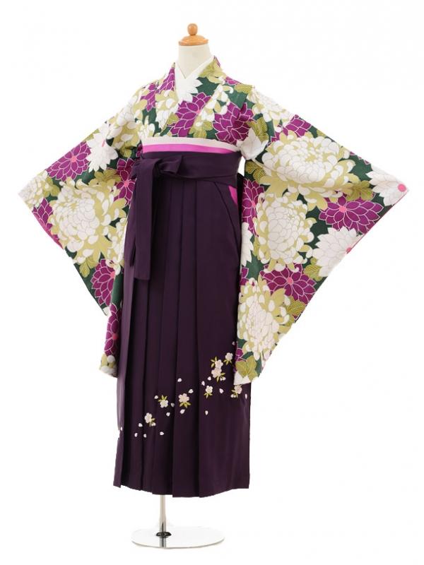 小学生卒業式袴レンタル(女の子)9237 グリーン菊×パープル袴
