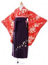 小学生卒業式袴女児9391赤地桜×パープル袴