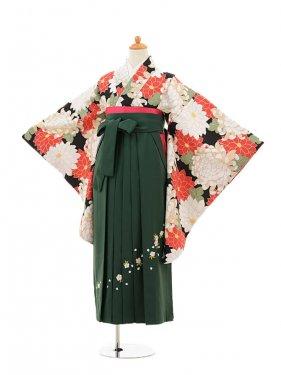 小学生卒業式袴女児9137 黒地菊×グリーン袴