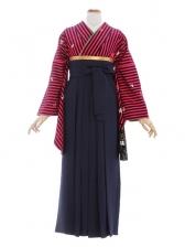 女性袴477/ピンク黒ストライプ柄