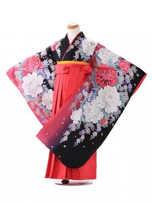 卒園式 ジュニア袴(女の子) ブルークロス 黒 7201