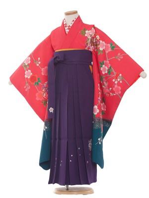 女児袴(7女) 9049 ピンク×水色/桜/袴
