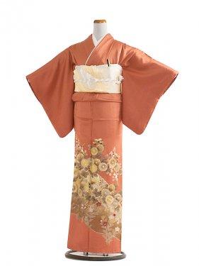 色留袖 24 オレンジブラウン/菊