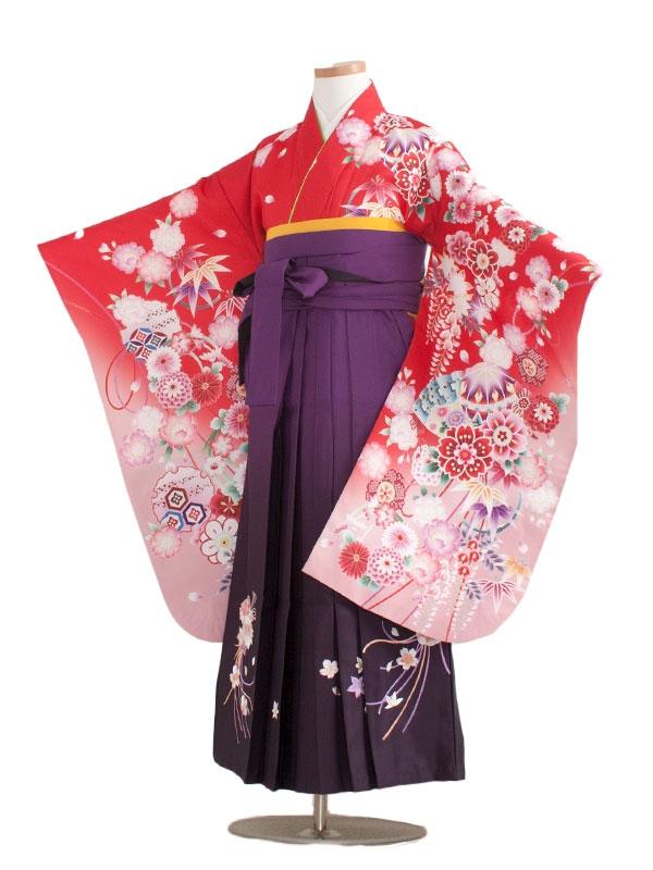 小学生卒業袴(女の子)1312赤絵羽柄/紫ぼかし